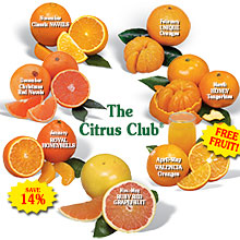 The Citrus Club