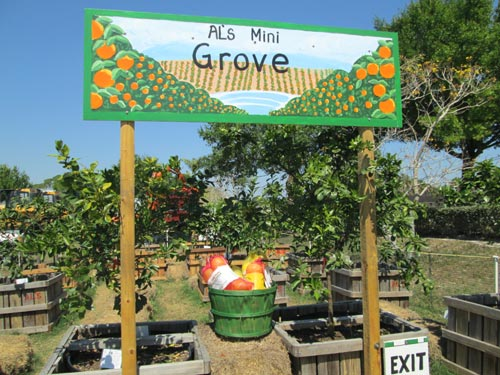 Al S Mini Citrus Grove